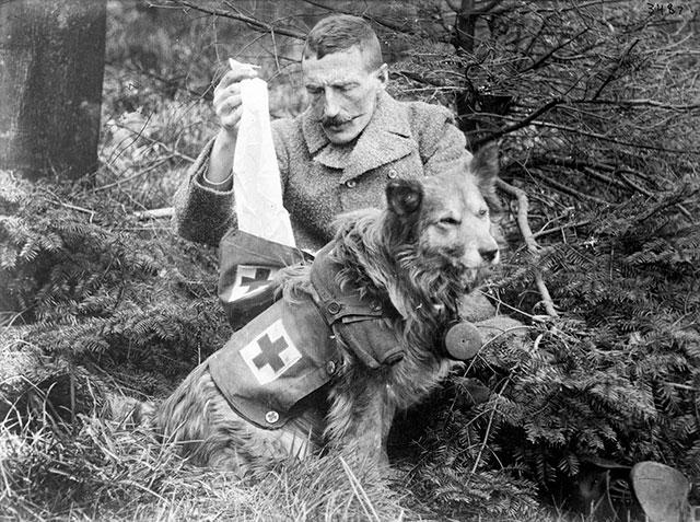 Soldado retira ataduras do kit transportado por um cão médico britânico, em 1915