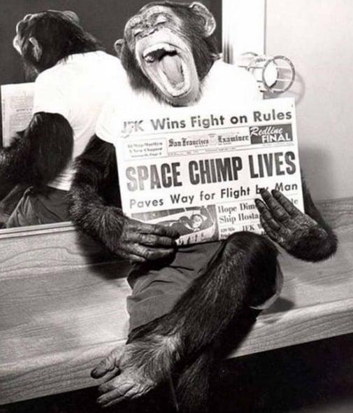 Macaco segurando um jornal de 1961 no qual relatava sua sobrevivência após uma viagem espacial
