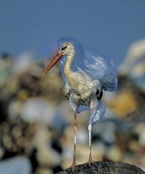 Isso é o que pode acontecer quando nosso lixo chega até os animais. Fotografia da National Geographic