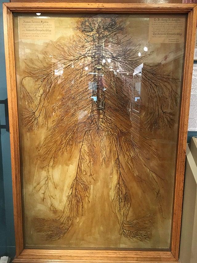 Sistema nervoso humano que foi dissecado por dois estudantes de medicina em 1925. Eles levaram mais de 1500 horas para concluir o trabalho. Existem apenas 4 destes do mundo