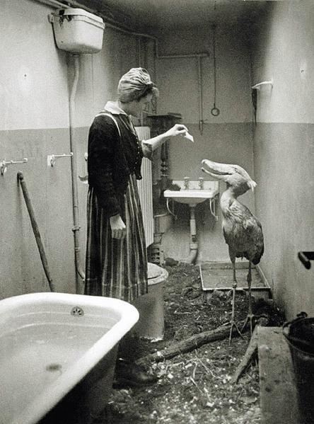 Quando as tropas soviéticas se aproximaram de Berlim, em 1945, os cidadãos fizeram o possível para cuidar dos animais do zoológico de Berlim