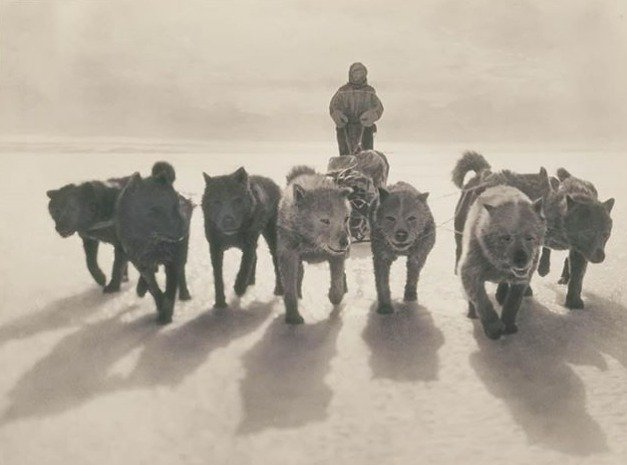 3) Explorador suíço, montanhista e esquiador, Xavier Mertz, e sua equipe de huskies em Adelie Land, em 1912