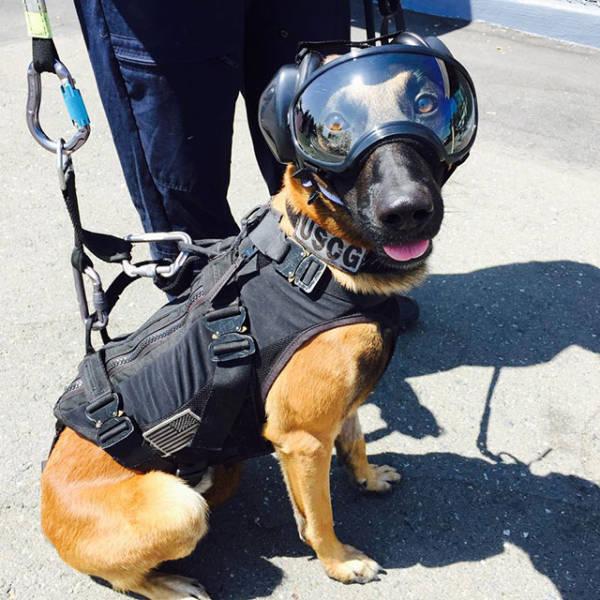Este cachorro está pronto para pular de um helicóptero