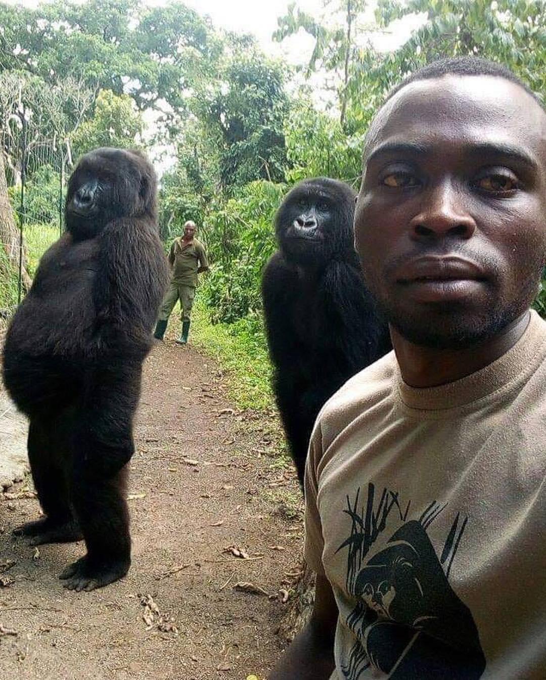 Grupo anti-caçadores e os gorilas que eles ajudam a preservar