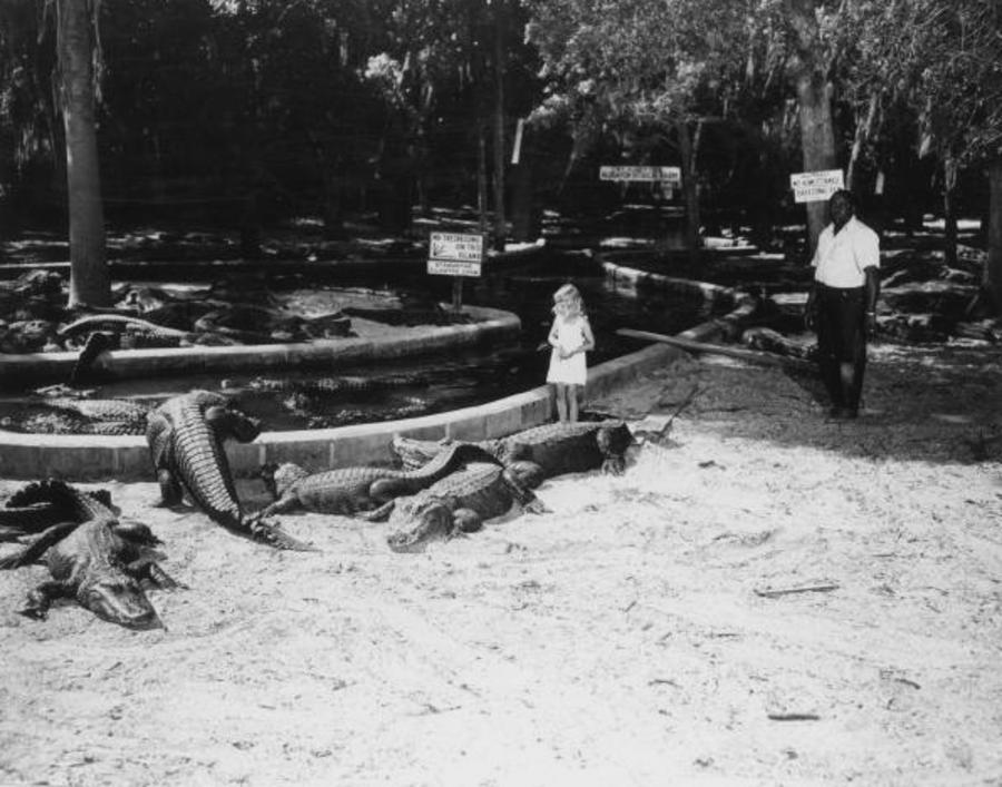Garota com sua família numa fazenda de jacarés na Flórida, em 1948