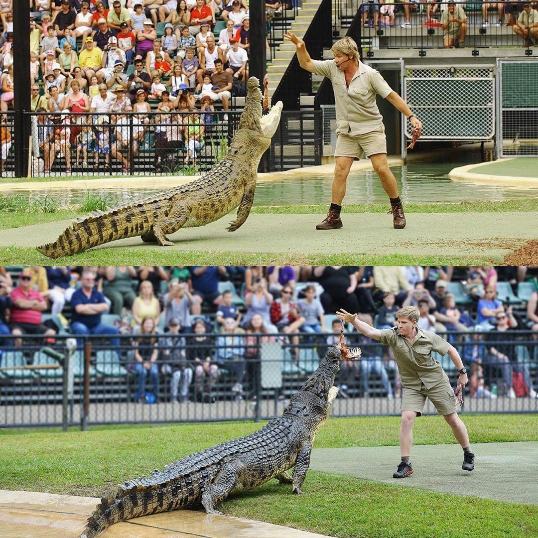 Robert Irwin alimentando o mesmo crocodilo, no mesmo lugar, que seu pai, Steve Irwin, 15 anos atrás