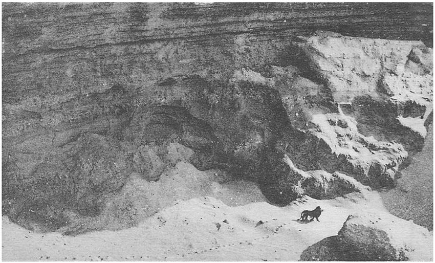 Acredita-se que esta seja a última foto tirada de um leão da Barbária, espécie extinta. A foto foi tirada a bordo de um voo Casablanca - Dakar, em 1925. Os leões da Barbária estavam entre os maiores leões de todos os tempos e eram usados nas lutas entre gladiadores