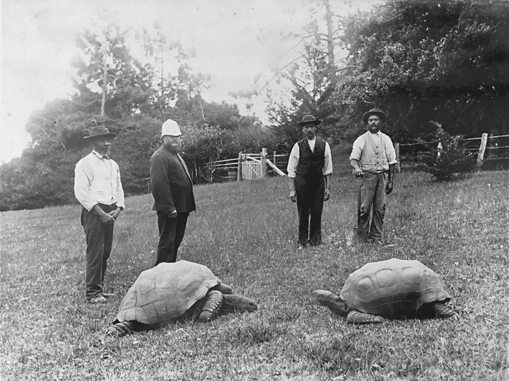 Tartaruga Jonathan (à esquerda) fotografada em 1886. Ela ainda está viva e detém o recorde de animal terrestre mais antigo do mundo