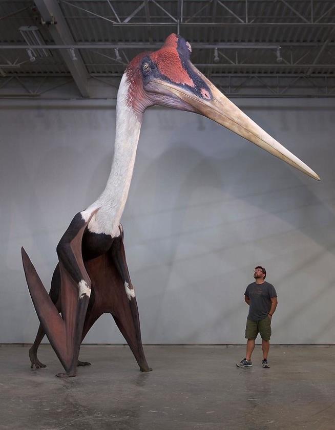 Quetzalcoatlus Northropi, o maior animal voador que se tem conhecimento, em comparação com um homem de 1,80 metro. Ele media pelo menos 3 metros de altura e tinha entre 10 e 11 metros de envergadura