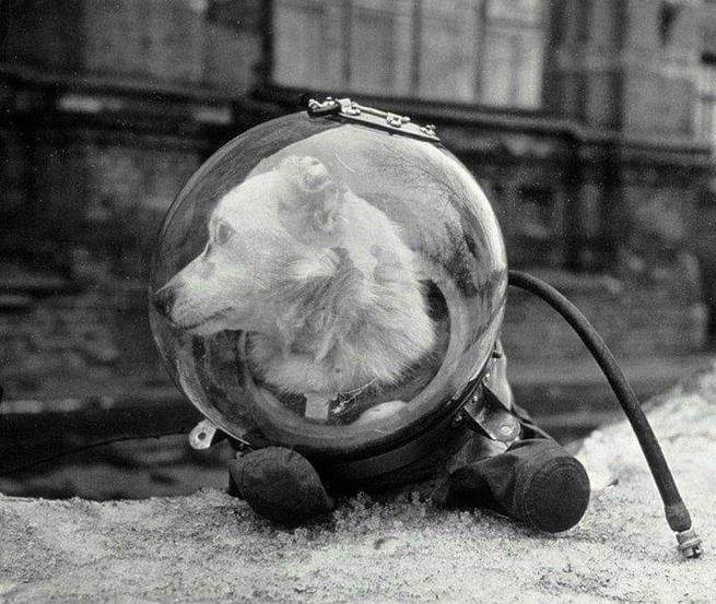 Belka, uma cadela soviética que foi ao espaço no Sputnik 5. Ela retornou à Terra com segurança em agosto de 1960