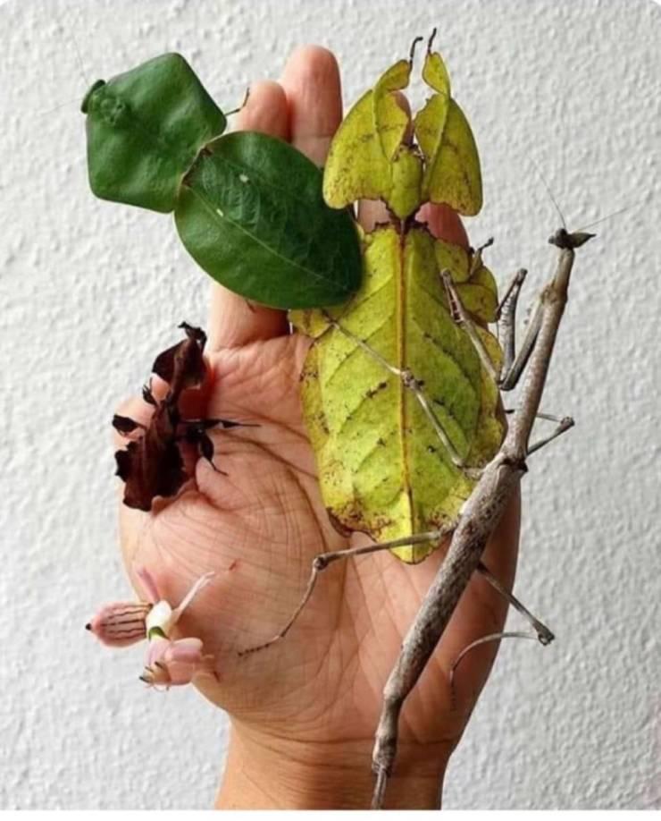 Insetos que parecem folhas e galhos