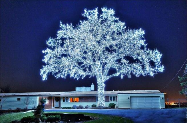 40 mil LEDs instalados perfeitamente para iluminar uma árvore