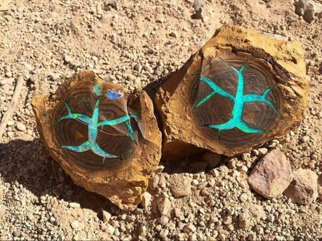 Madeira petrificada contendo opala turquesa encontrada em Queensland, Austrália