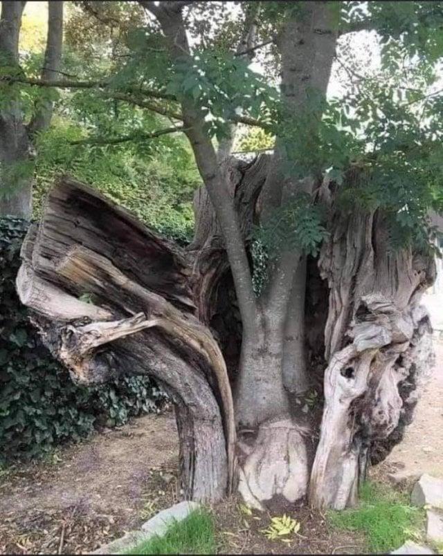Esta imagem representa a força da natureza... o renascimento de uma árvore