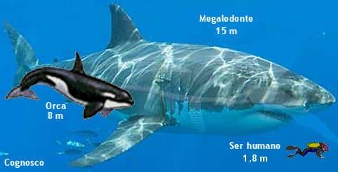 Aqui está um Megalodon em comparação com uma baleia e nós, humanos. Eles viveram há aproximadamente 23 a 3,6 milhões de anos