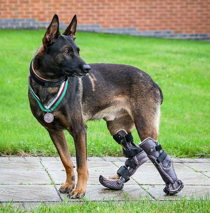 Kuno, um cão do exército britânico que perdeu o movimento das pernas lutando para salvar as vidas dos soldados britânicos que lutavam no Afeganistão. Durante uma missão, ele abordou um atirador e foi atingido nas pernas traseiras. Ele recebeu uma medalha de honra pelos serviços prestados às forças armadas