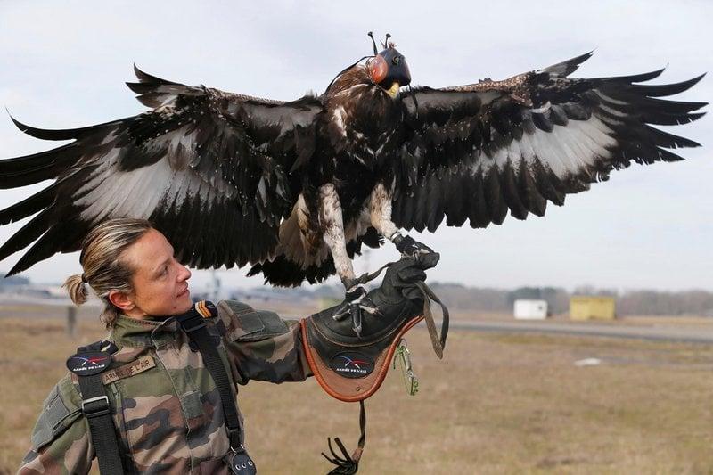 Soldado francesa treinando águia para abater drones
