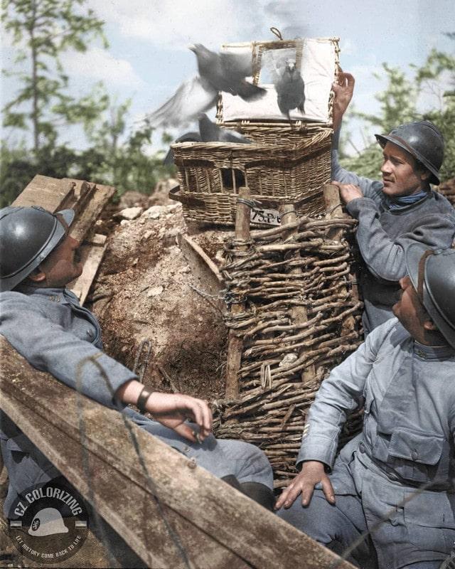 Soldados soltando pombos-correio que usaram sua habilidade para entregar mensagens da linha de frente. Foto tirada durante a Primeira Guerra Mundial