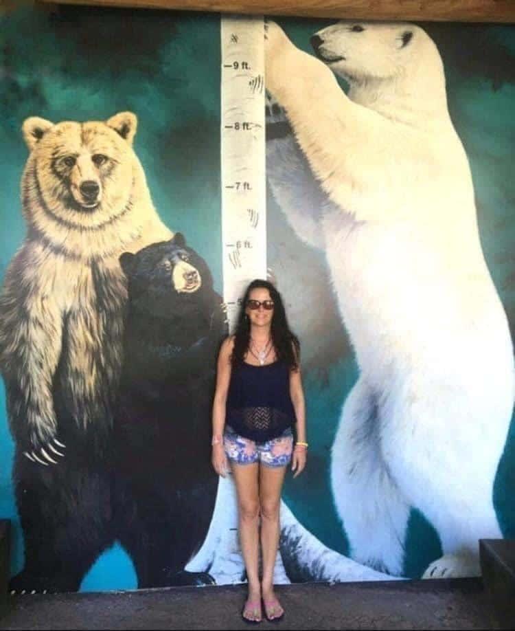 Este é o tamanho real dos ursos em comparação com uma mulher adulta