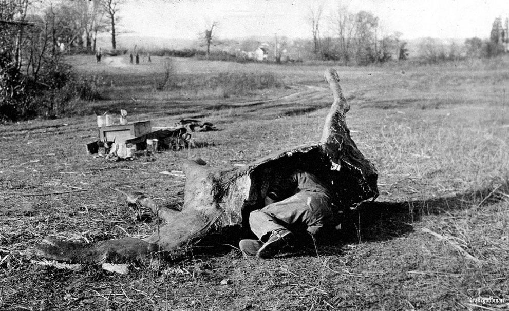 Sniper se esconde em falsa carcaça de cavalo, durante Primeira Guerra Mundial