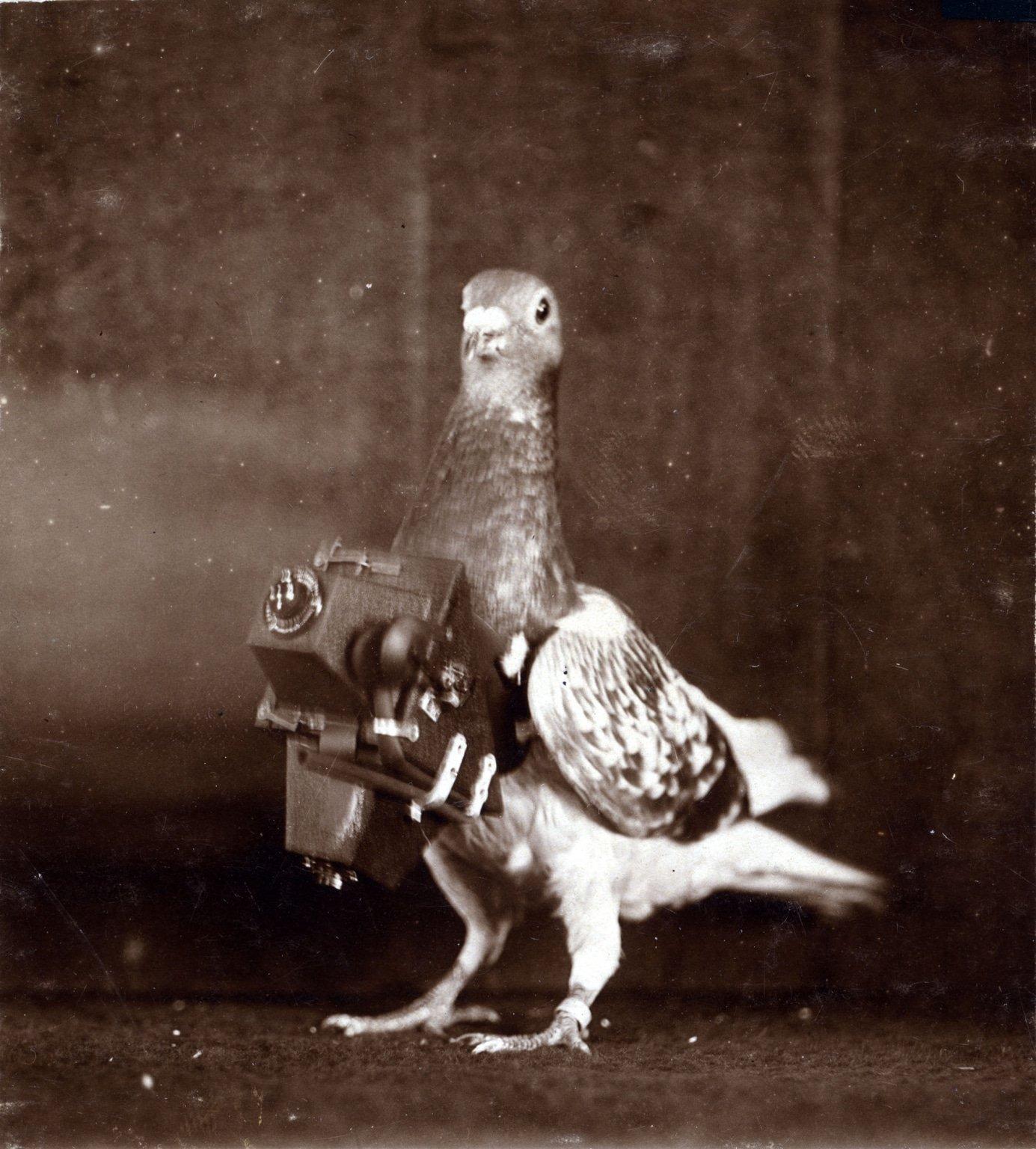 Também durante a Primeira Guerra Mundial, pombos com câmeras foram usados para reconhecimento aéreo.