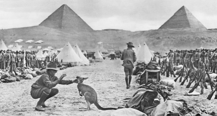 Tropas australianas no Egito controlado pelos britânicos durante a Primeira Guerra Mundial. Eles levaram cangurus com eles para o caso de ficarem com saudades de casa (1914)