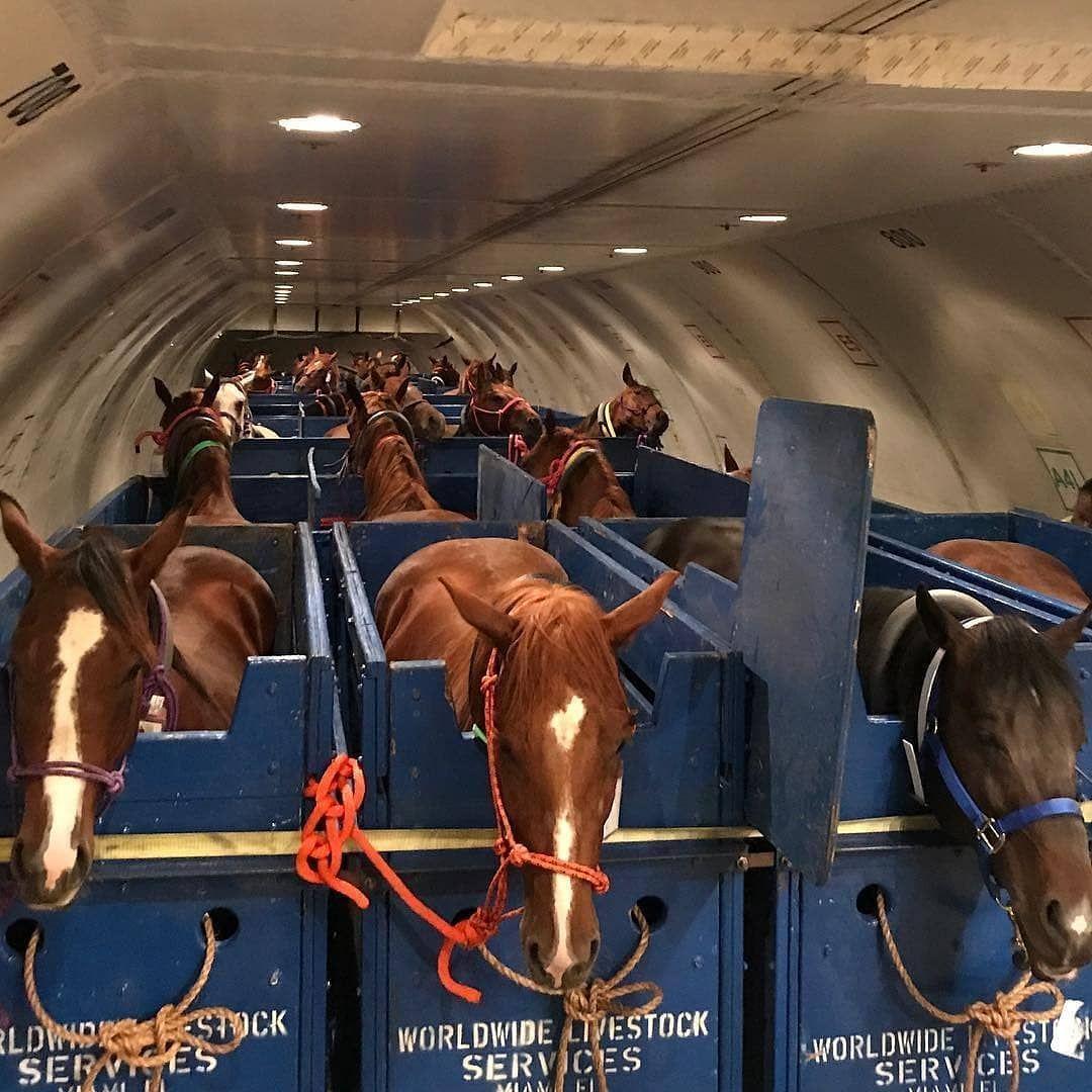 Este é um avião preparado exclusivamente para transportar cavalos
