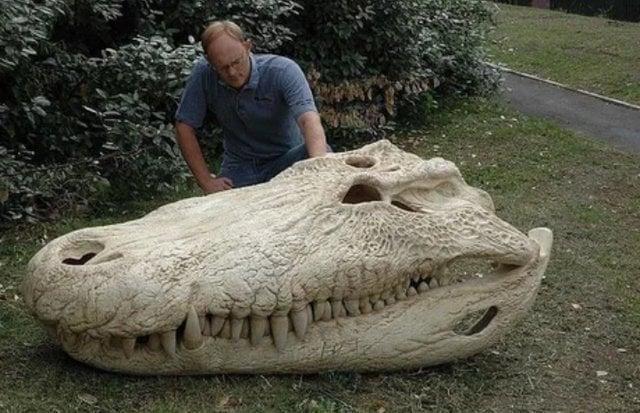 Crânio do purussaurus, extinto há 8 milhões de anos, um dos maiores crocodilos que já existiu