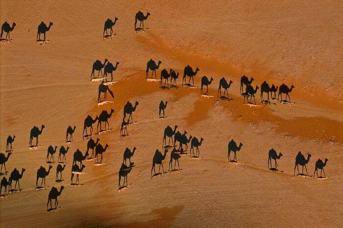 As linhas brancas são camelos e as pretas são sombras