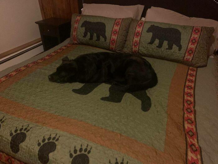 Cachorro deitado num cobertor de urso