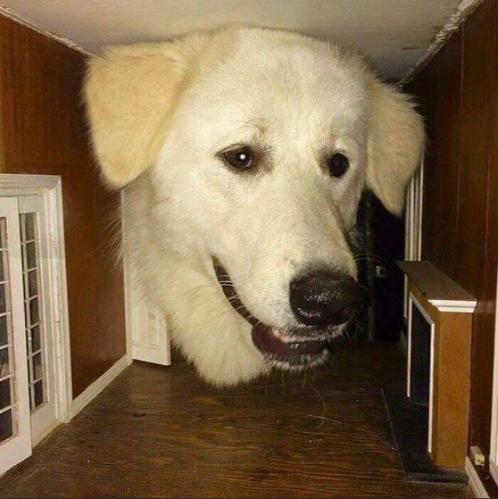 Apenas um cachorro curioso colocando a cabeça dentro de uma casa de bonecas.