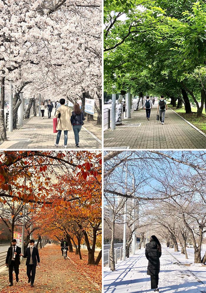 Mesmo lugar, em Yeouido, em épocas diferentes do ano, registrando as quatro estações.