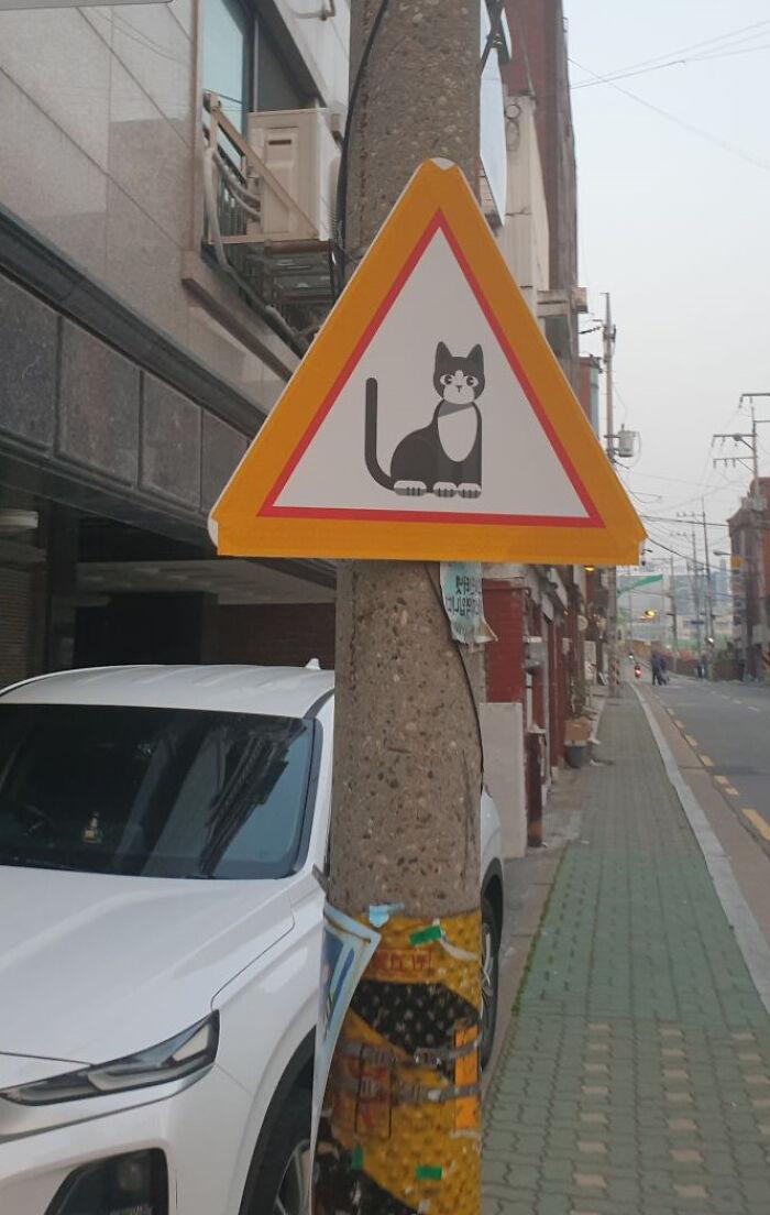Este é um sinal para tomar cuidado com os gatinhos que estão por perto.