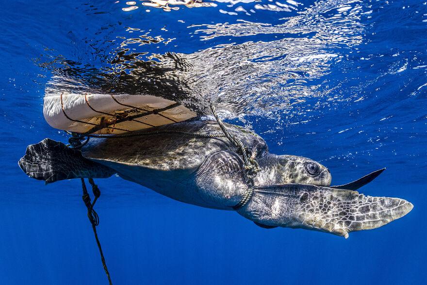 Fotógrafo de conservação do oceano, Healey Spires