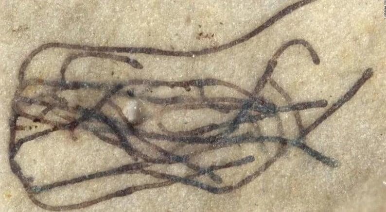 Cientistas de Viginia Tech encontraram um fóssil de bilhões de anos que se acredita ser um ancestral das primeiras plantas da Terra.